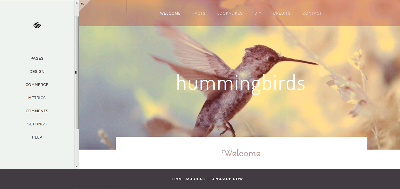 projects-squarespace-squarespace-editor